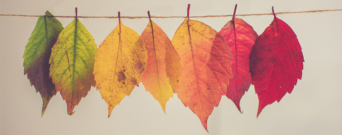 colorful-fall-leaves