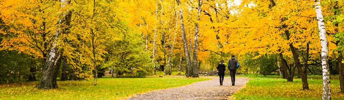park-yellow-leaves